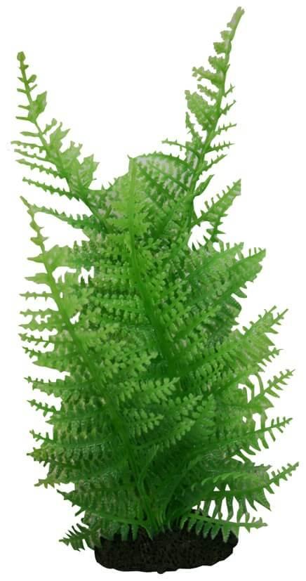 MPS Reptilienpflanze Farn ca. 20 cm