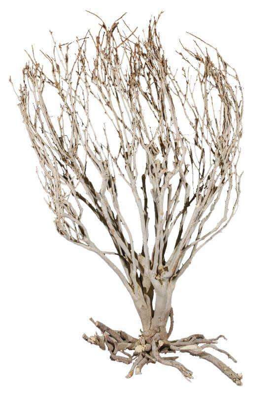 Savannenbusch