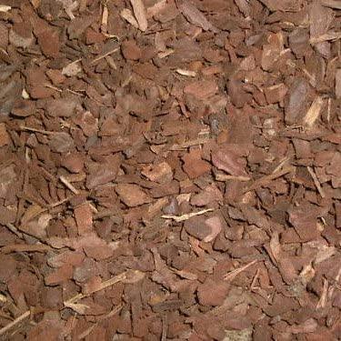 Forest Floor Pine