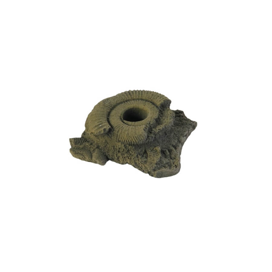 Pflanzhilfe Fossilien klein