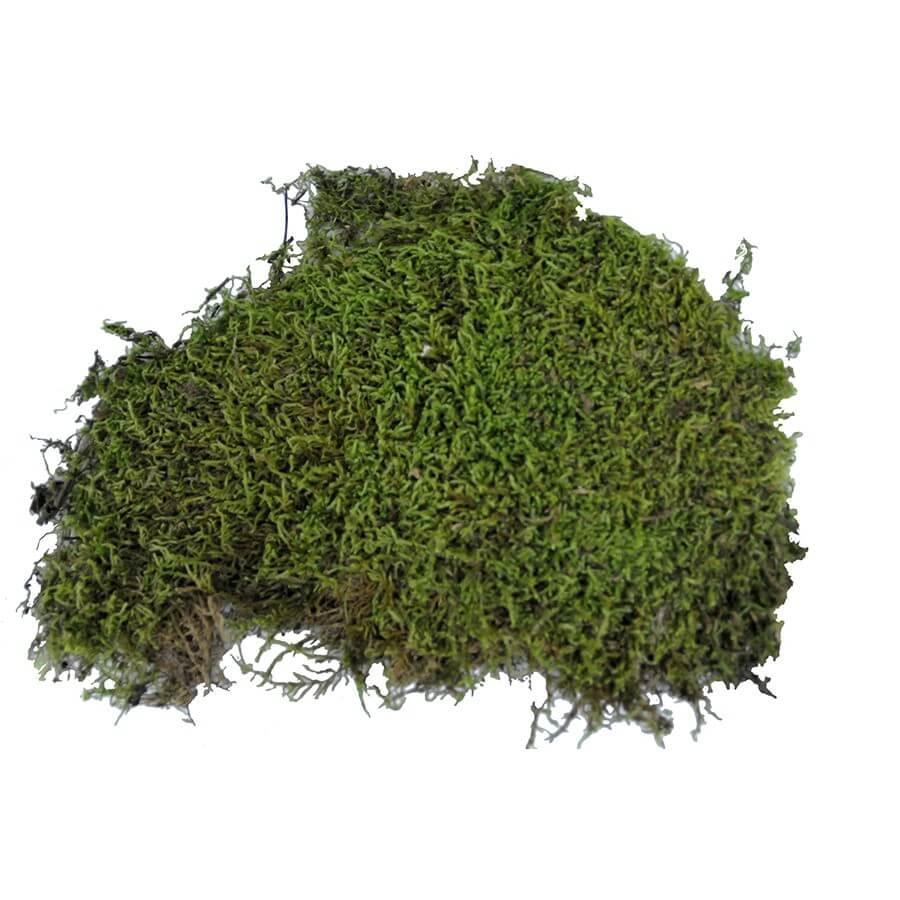 Vivarium Moos 150 g
