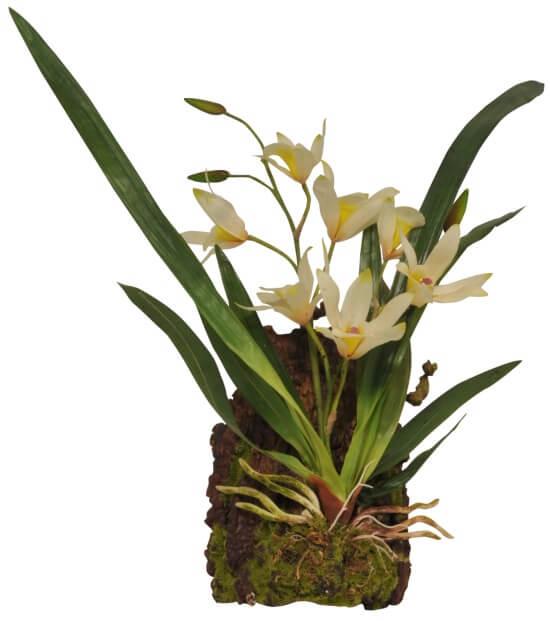 Hänge Orchidee Weiss