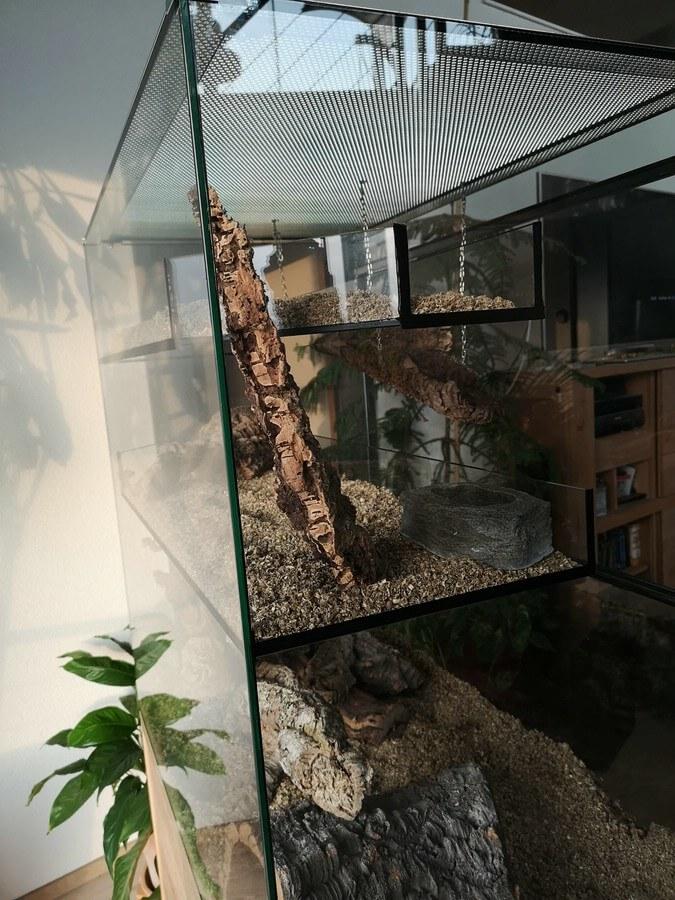 Degu Terrarium