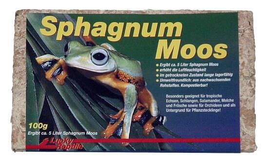 Sphagnum Moos