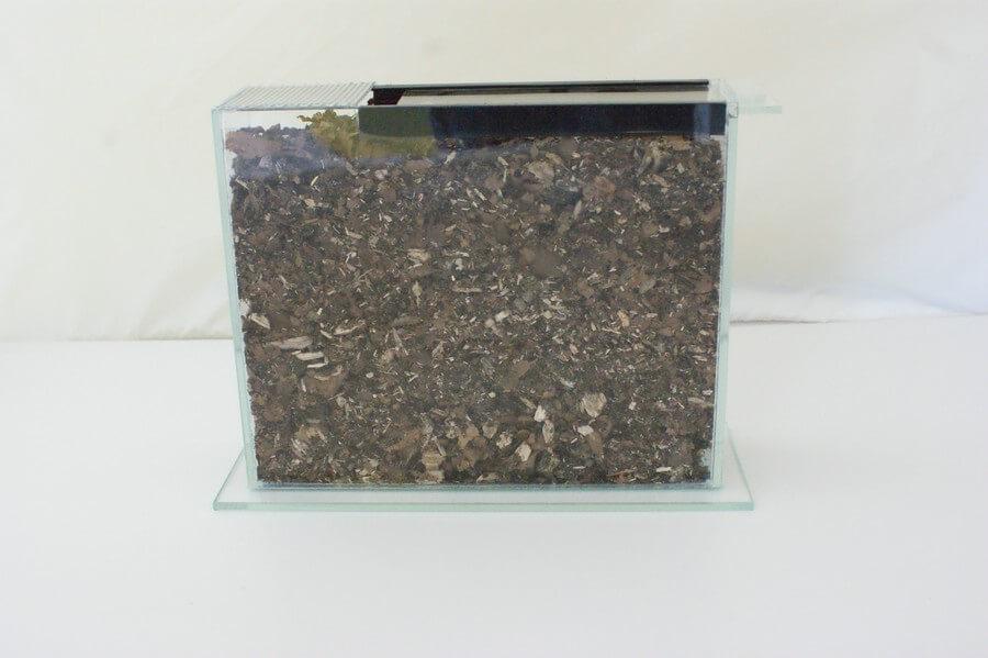 Käferlarven - Terrarium