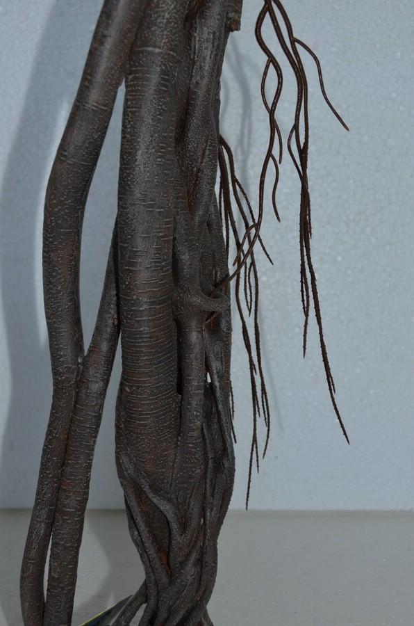 Mangrove mit Luftwurzeln stehend