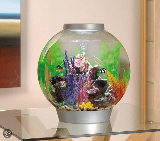 biOrb 60 Liter Aquarium Kugeldurchmesser ca. 50 cm