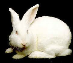 Kaninchen ganz, gefroren