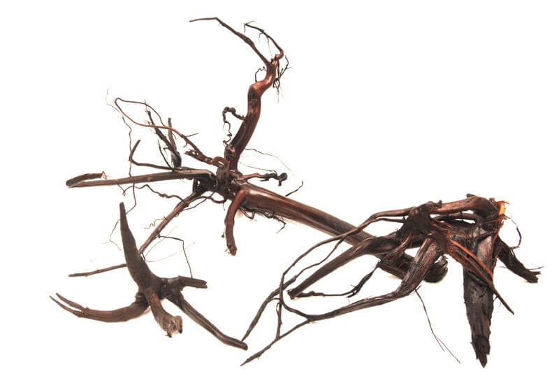 Moorkienholz, trocken, gestrahlt