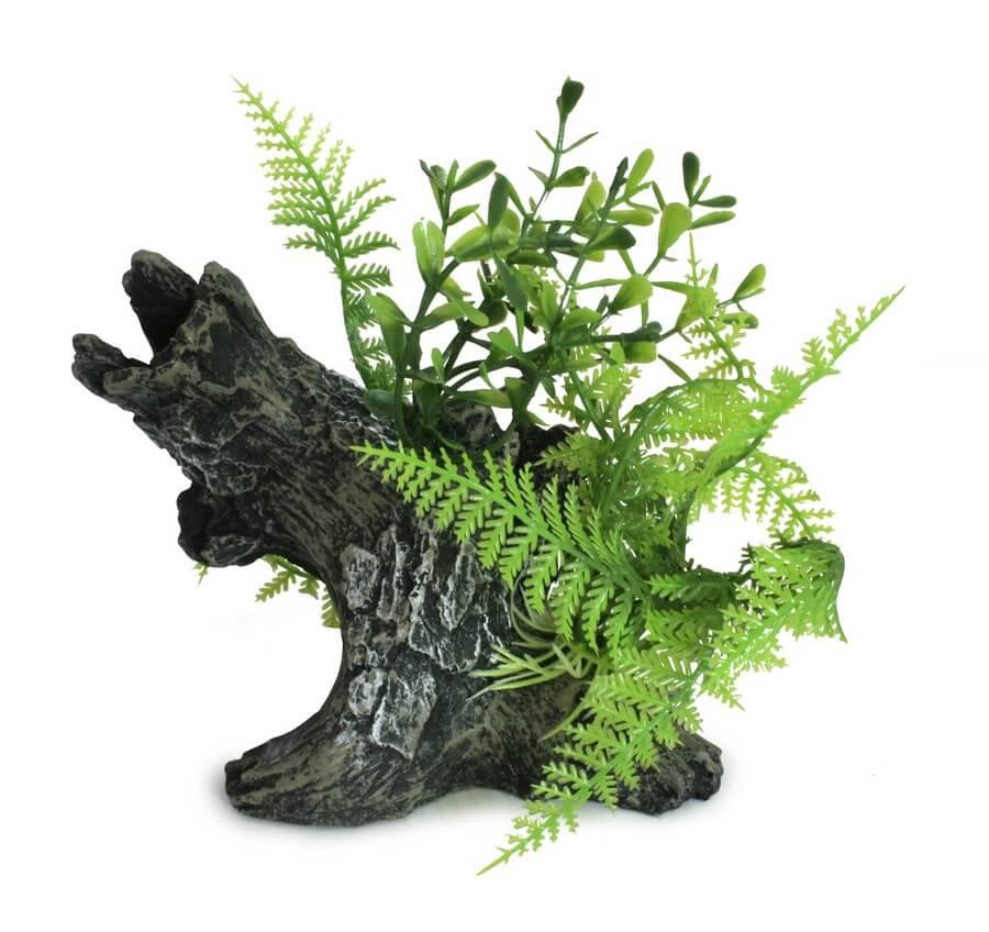 Pflanzen auf Holz