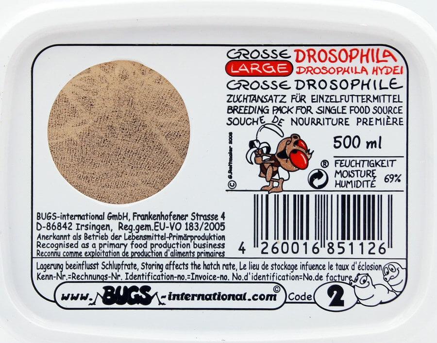 Drosophila gross