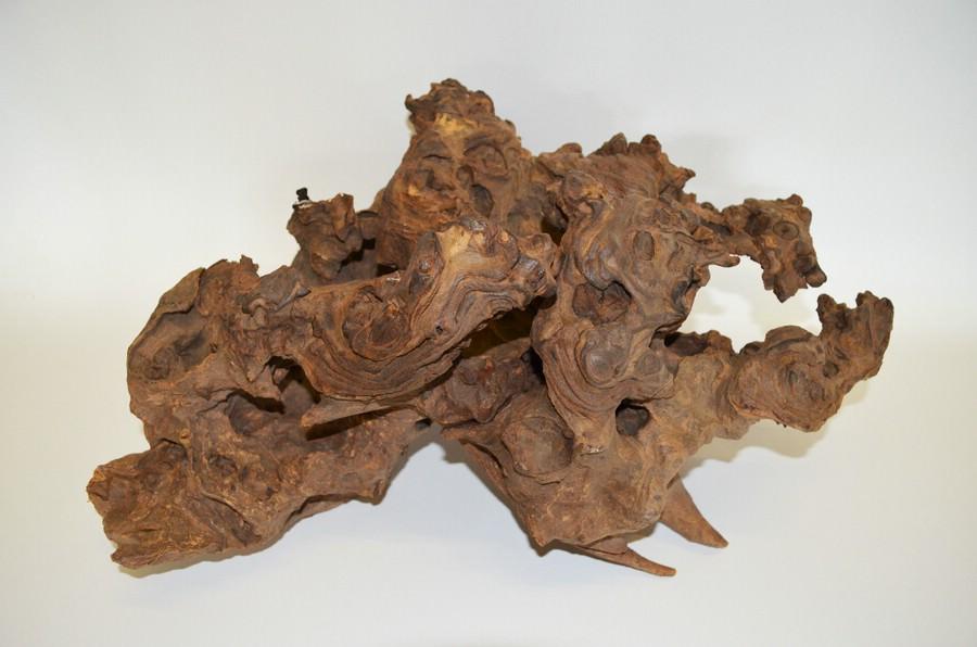 Wurzeln Savannenholz
